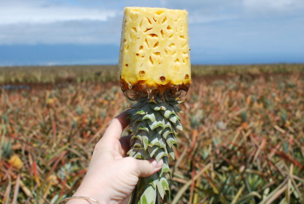 maui pineapple farm tours