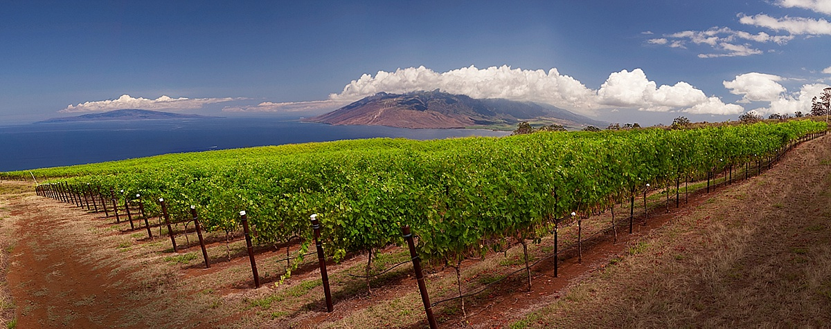 upcountry maui activities