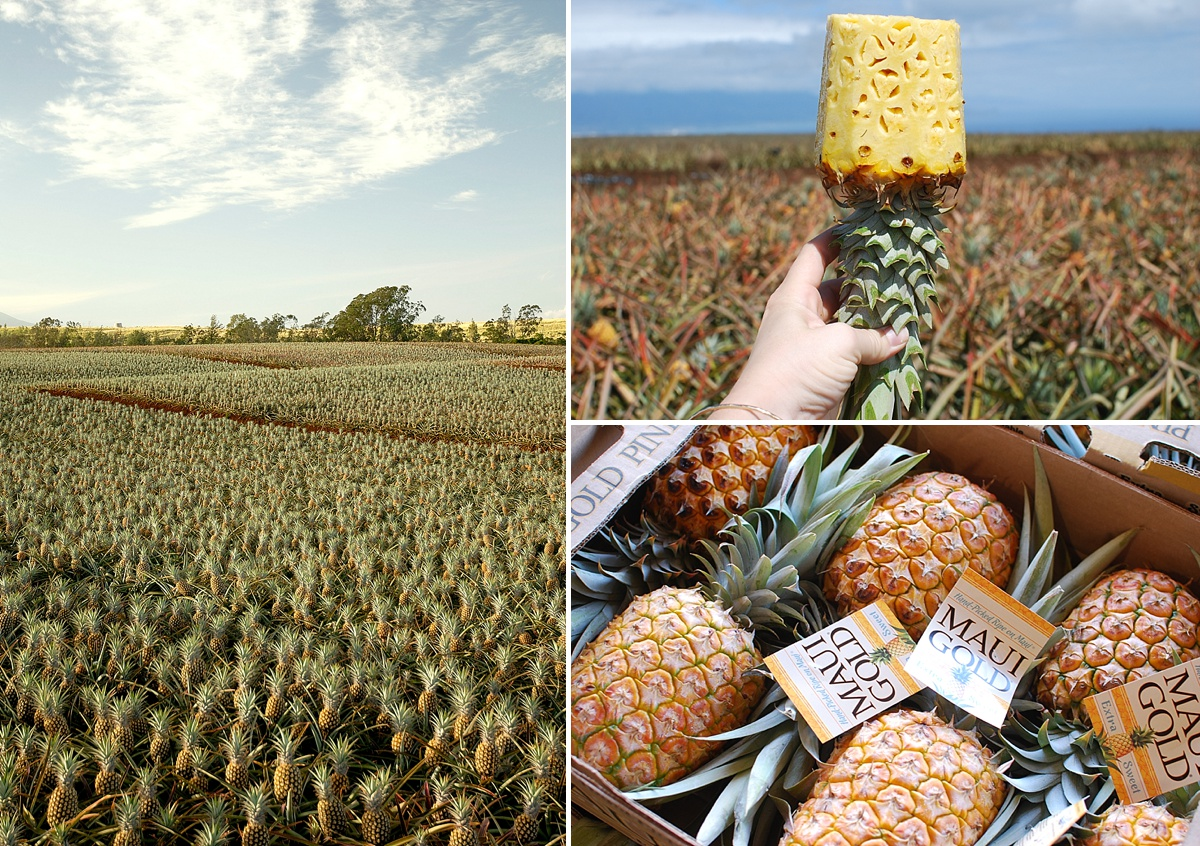 Pineapple Plantation Tours On Maui