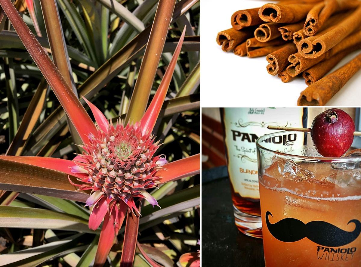 maui top cocktails