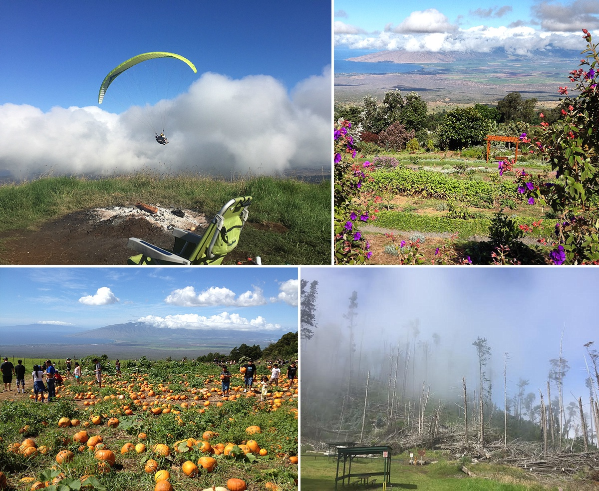maui upcountry tours